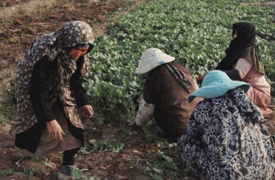 سرِزمین: گزارشی از وضعیت زنان کشاورز افغانستانی حاشیهی تهران